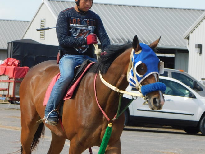Horses at Evangeline Downs are being exercised regularly, as track officials target opening as early as June 5 after operations were restricted in response to the COVID-19 pandemic.