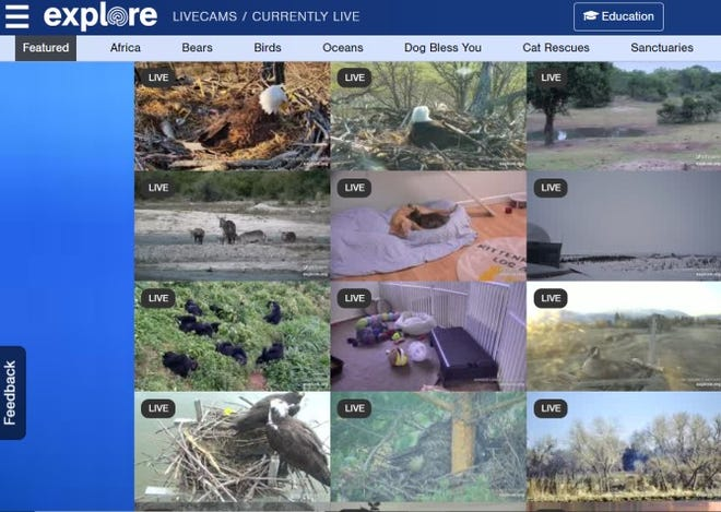 Explore.org takes users to remote locations around the world.