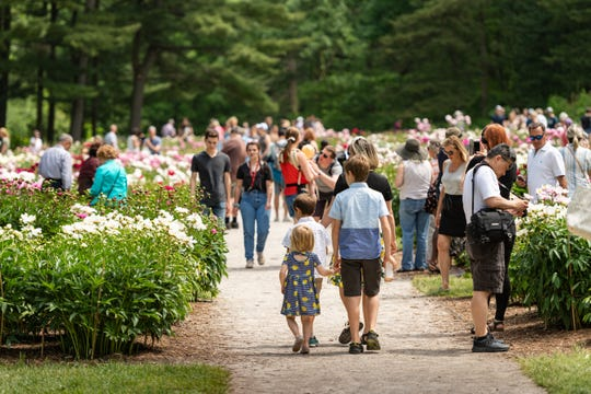 Not this year: Covid-19 has closed UM's Peony Garden at Nichols Arboretum, but mark your calendar for June, 2021.