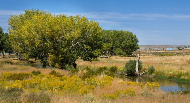 The Walker River State Recreation Area spans 32,000 acres of rangeland along 28 miles of the picturesque East Walker River.