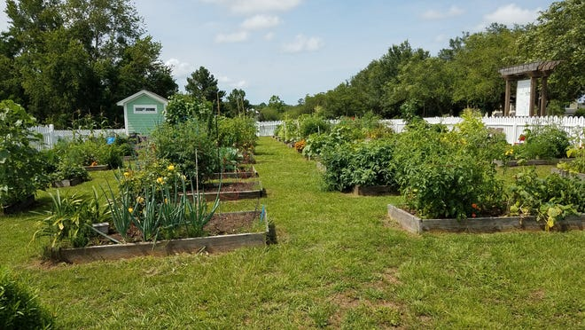The Southwood Community Garden, shown in May 2020, has a waiting list for the first time.