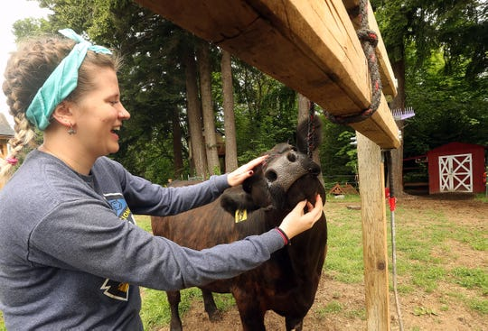 Rebecca DePoe, 17, scratches the chin of her steer Jackson at her home in South Kitsap on Tuesday.  DePoe and other youth who were planning to raise livestock for the annual youth auction that takes place at the Kitsap County Fair now are looking at new markets to sell their animal and recoup their costs.