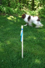 Tim Ouellette's dog blurs past a survey marker just outside his Milford Township property where the new Saginaw Trail pipeline will be placed.