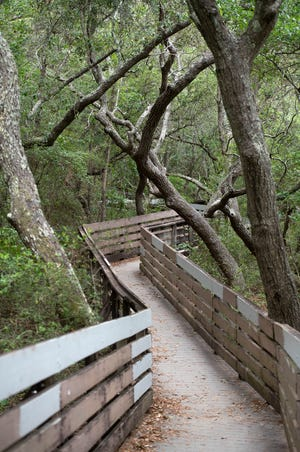 The boardwalk of Summit Park is an excellent site for exercise, and its multiple elevation changes make it ideal for cardio training.