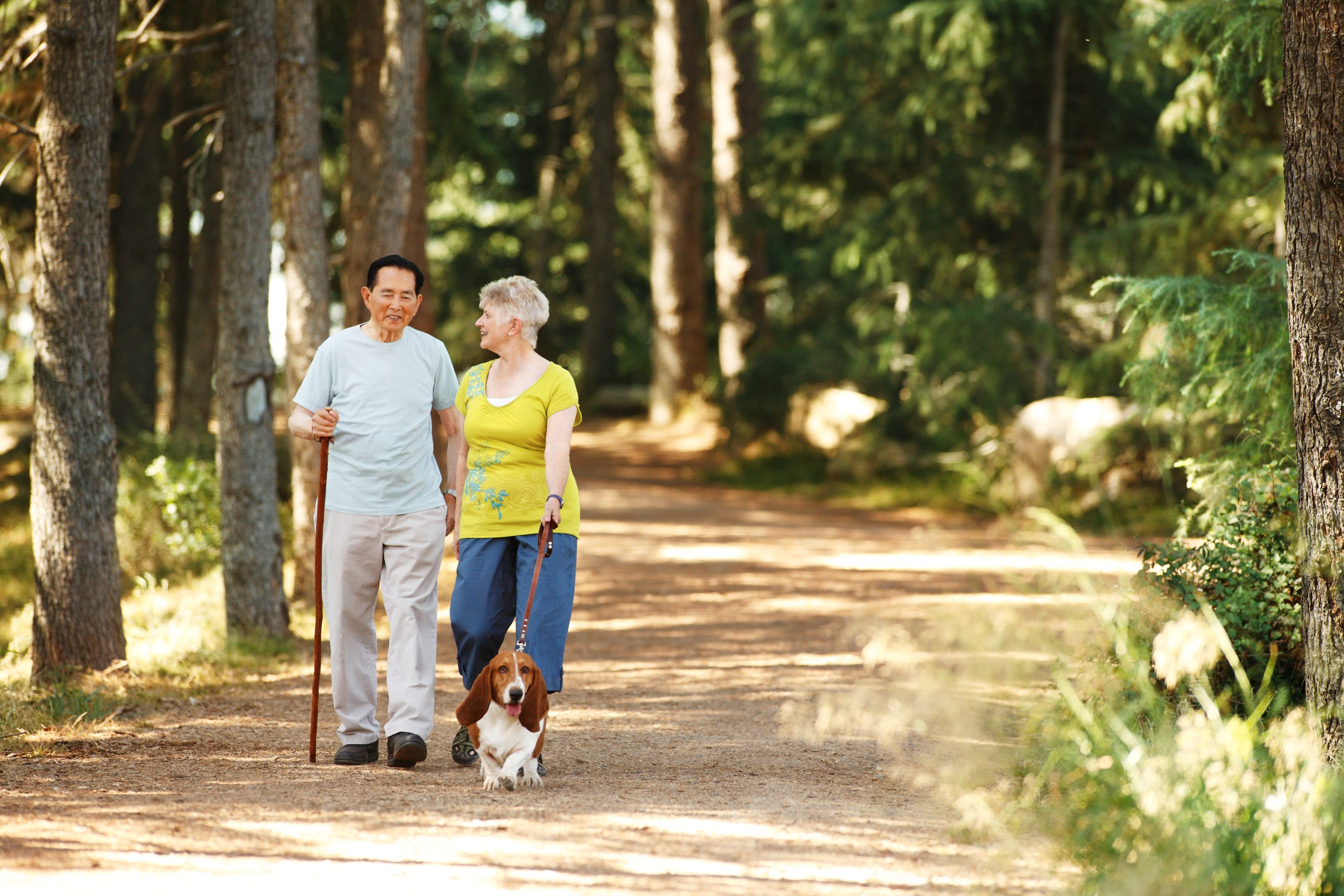 Walks through a quiet forest can help alleviate stress and improve physical health.