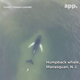 A screengrab of drone footage taken by Thomas Lozinski of a humpback whale swimming off Manasquan on June 2.