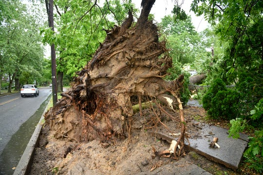 A fast moving storm that ripped through South Jersey on Wednesday afternoon uprooted large trees in Hammonton. June 3, 2020.