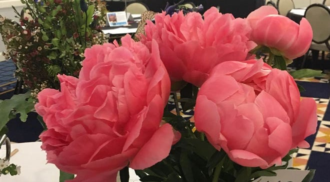 Beautiful peonies exhibited at the UAY Flower Festival 2019.