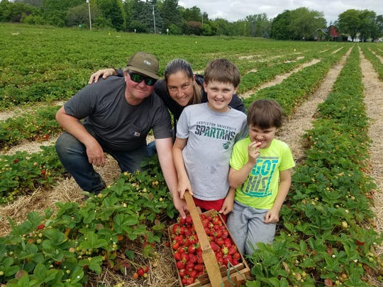 Jeff and Sue Knudsen pick strawberries in their farm, Barthel Fruit Farm, with their children, Lukas and Nathan.