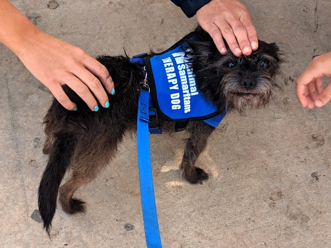Bean, a therapy dog from Animal Samaritan's Animal Companion Therapy program gets some love.