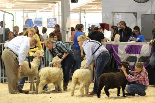 Youth exhibitors from across the state will not have the opportunity to compete against one another this summer due to the Wisconsin State Fair - and many county fairs being cancelled due to the coronavirus pandemic.