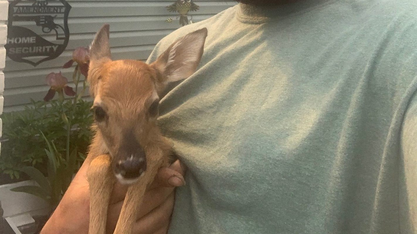 Trenton man saves fawn on the side of I-75