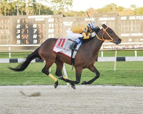 King Guillermo and jockey Samy Camacho win the Tampa Bay Derby on March 7.