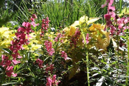 Kiroli Park is in full bloom for summer.