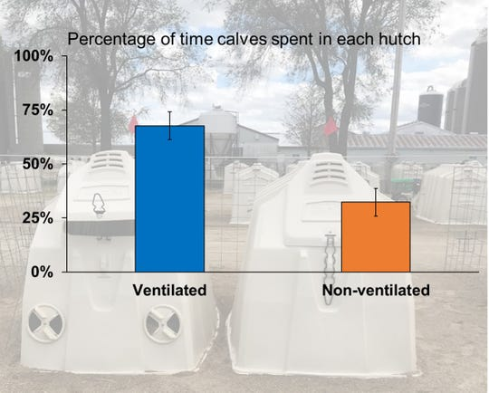 During a study, calves sought out ventilated hutches, spending 68% of their time there, with 16 out of the 20 pairs spending over half of their time in that hutch.