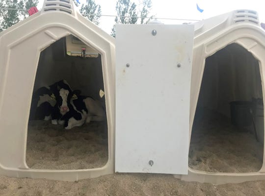 Calves housed in outdoor hutches are more exposed to environmental extremes compared to those housed in barns.