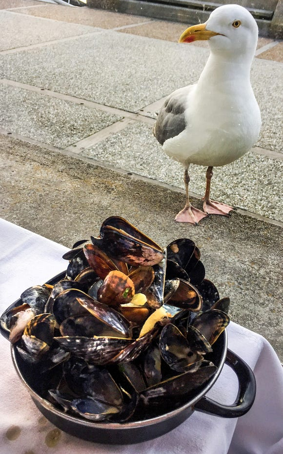 A seagull eyes a pan of Normandy mussels at a beachside restaurant on the Normandy coast.
