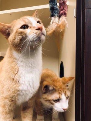 An anonymous person stepped up to sponsor two homeless cats, Creamsicle and Sherbert at the Fond du lac Humane Society, after they learned that Chad Capule was a cat-lover. The 49-year-old IT manager from the Washington DC area came to St. Agnes Hospital in Fond du Lac to install a new computer system. While here, he died from coronavirus on March 29.