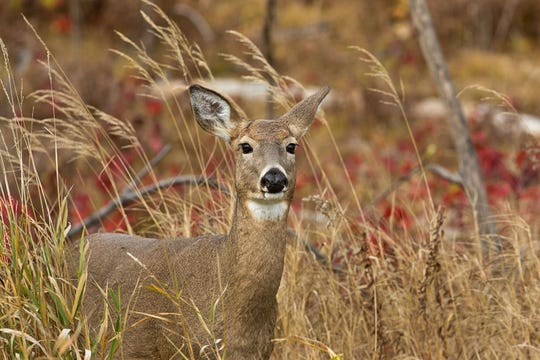 Apply for a seat on a County Deer Advisory Council by July 1.