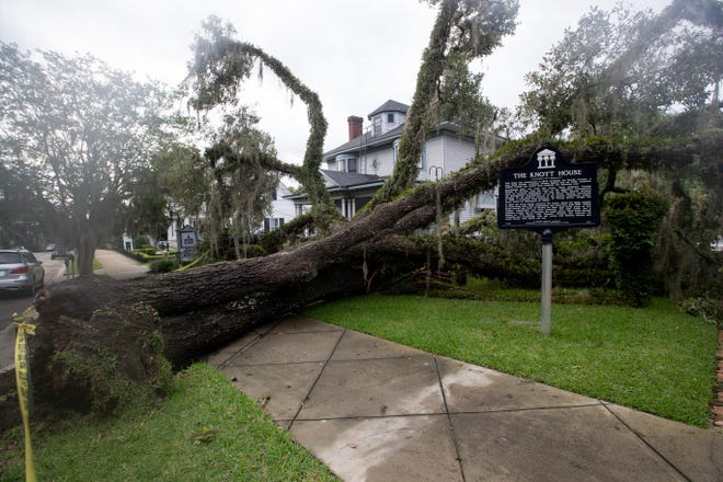 A large live oak tree fell between The Wood House and The Knott House on East Park Avenue in 2020.