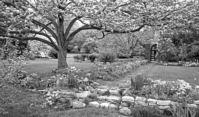 The spring garden of Rose Rosenfield, located at 207 37th St. in Des Moines, and photographed around 1953 by photographer Carl Turk. Mrs. Rosenfield, wife of Younkers department store executive Meyer Rosenfield, founded the Des Moines Garden Club in 1919. This photo, taken late in Mrs. Rosenfield's life, shows the results of half a century of work on her garden.