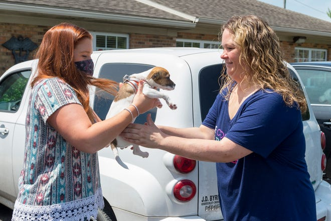 Dr. Mandy Pike, left, hands 8-week-old Oreo, a Jack Russell Terrier, to his owner Beth Lee after an examination at Warrick Vet Clinic in Newburgh, Ind., Friday afternoon, June 5, 2020.