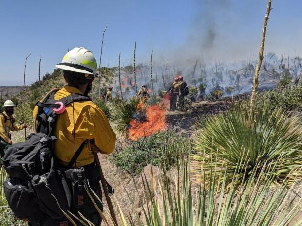 Firefighters work to contain the blaze from the Sierra de las Uvas wildfire Tuesday, June 9, 2020.