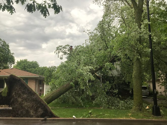 This scene of a toppled tree in Grosse Pointe Farms repeated itself over and over across metro Detroit on Wednesday evening after high winds and rain struck. (Photo by Christina Hall.)