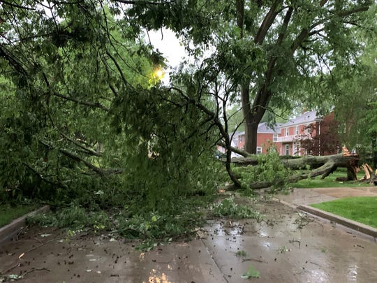 A cluster of trees fell in Grosse Pointe Woods