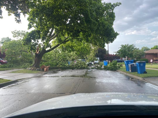 A tree blocked a west Dearborn neighborhood road.