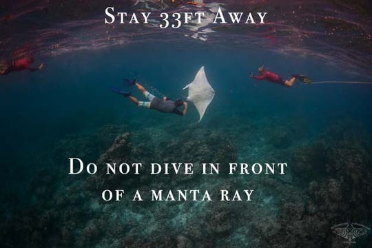Do not dive in front of a manta ray