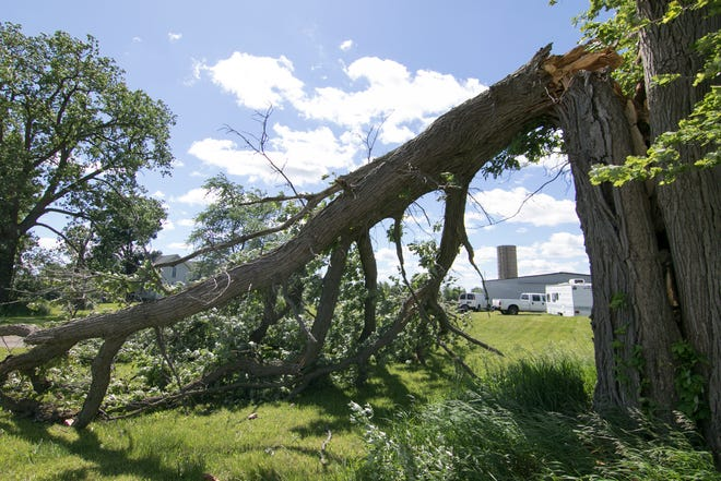 A tree, shown Thursday, June 11, 2020, was split on Van Buren in Handy Township, likely due to the strong winds that accompanied storms Wednesday.