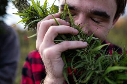 John Kimberly, a New York Harvest Festival and Freedom Fair attendee from New Jersey, smells a hemp flower, then cradles it in his hands at the Knarich Family Farm in Mount Vision, N.Y in October, 2019.