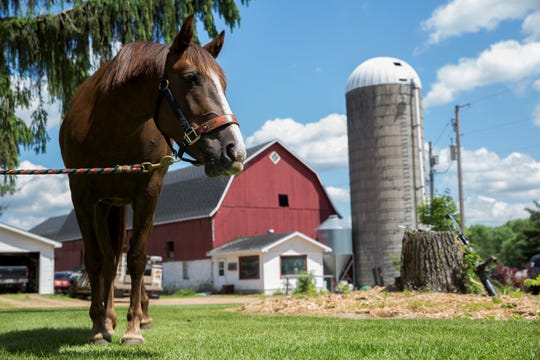 Nala, a mustang, stands in the yard on Friday, June 5, 2020, at a farm outside of Knowlton, Wis. Denice Feit won the chance to adopt Nala after writing an essay for a contest set up by a horse trainer in Florida.