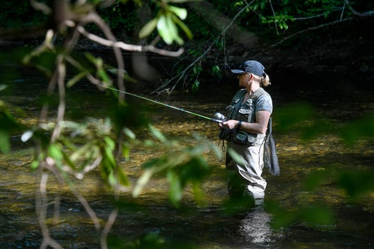 Karen Bailey, of Fletcher, stands in the Davidson River while fly fishing in the Pisgah National Forest June 12, 2020 in Brevard.
