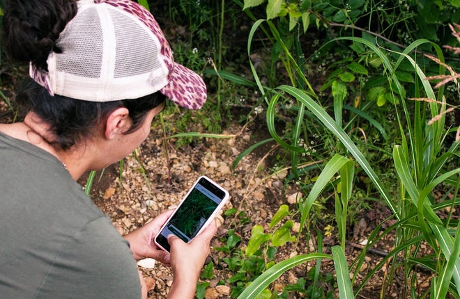 You can participate in a Great Parks virtual scavenger hunt using the iNaturalist app.