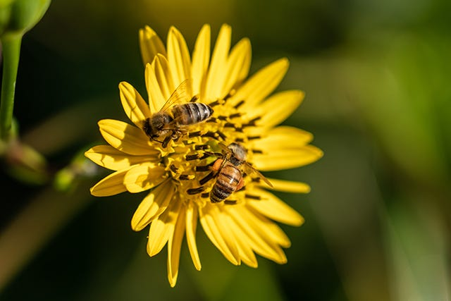 It's National Pollinator Week! Celebrate virtually with Great Parks of Hamilton County's list of fun events.