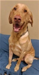 Colby Jack is waiting for a new home.