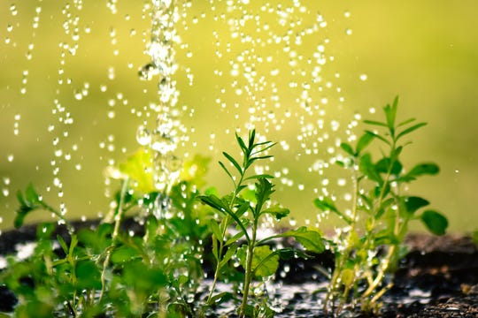 Plants need extra care during dry spells.