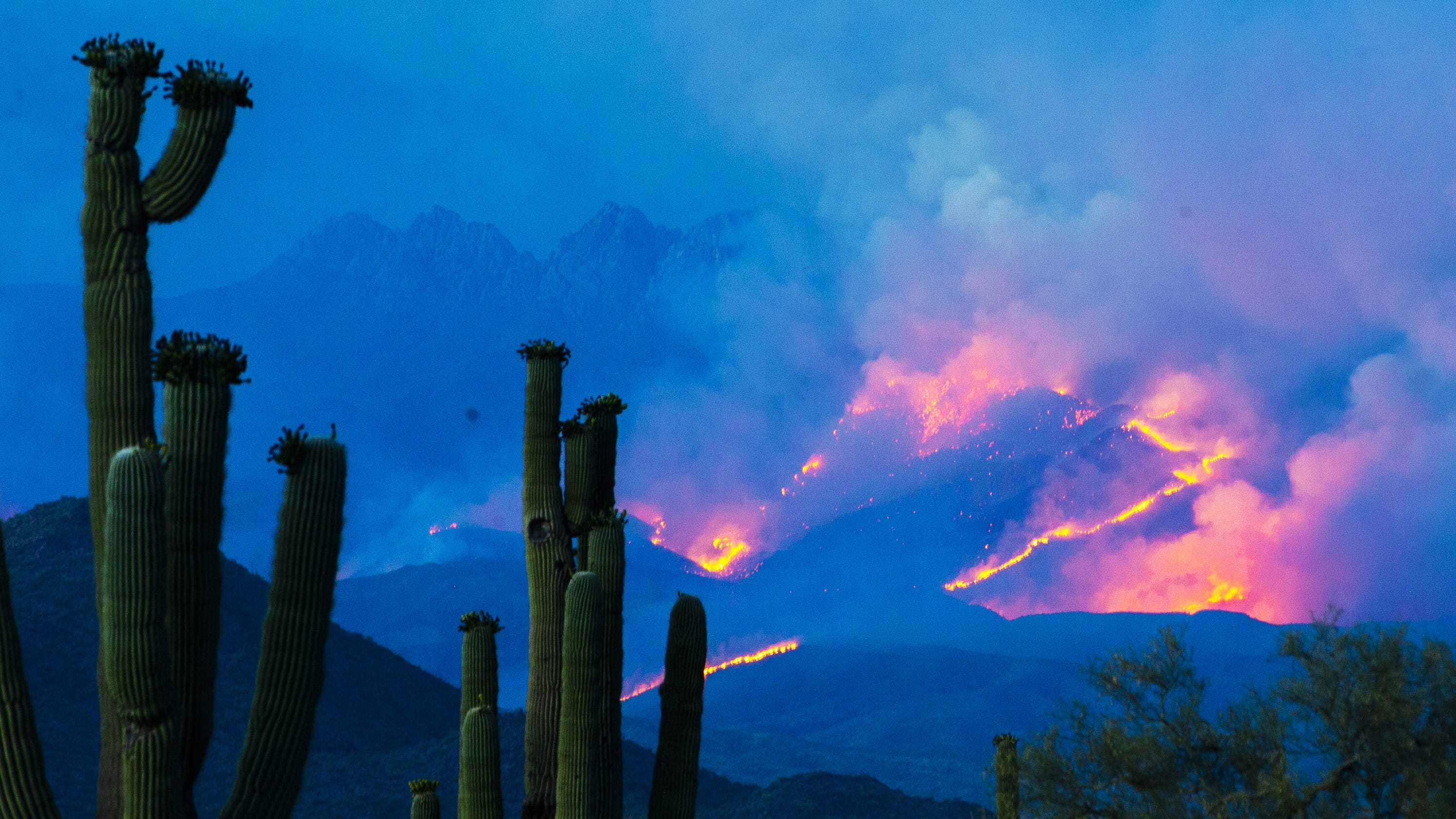 As Bush Fire becomes one of largest in Arizona history, water and wildlife at risk
