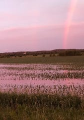 A rainbow is reflected in a pool of water collecting in a corn field north of Eden following a thunderstorm last week.