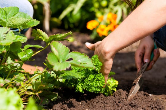 There are lots of benefits to having a garden — improved curb appeal and fresh veggies, to name a few.