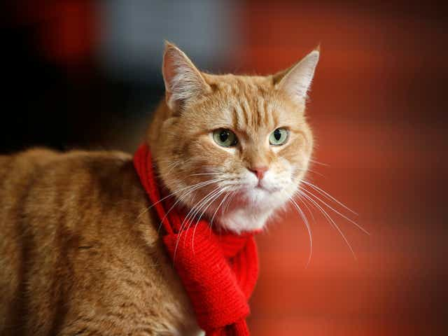 Bob the cat, who inspired James Bowen's 'A Street Cat Named Bob,' dies