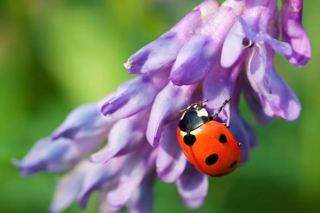 Ladybug Giveaway is Saturday.