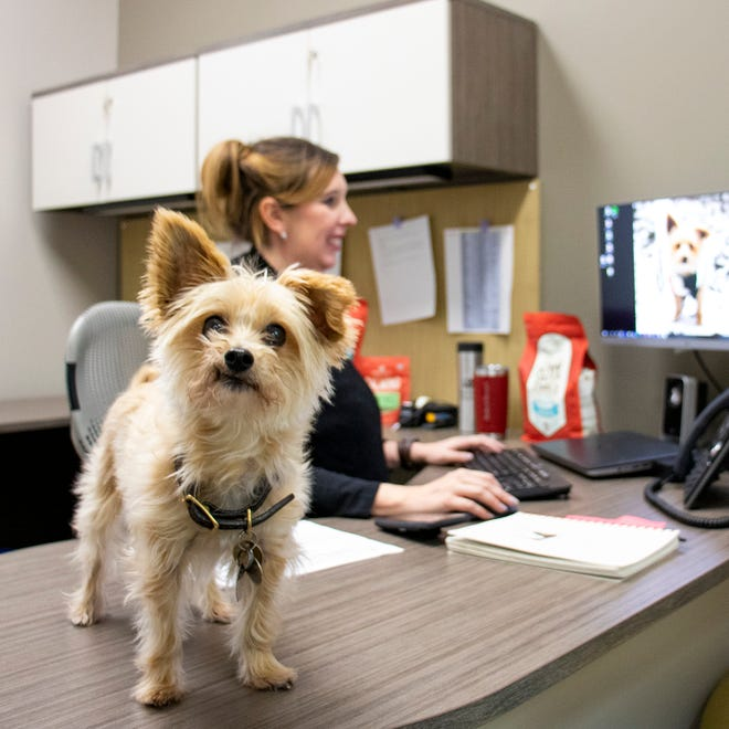 Stella & Chewy's employees in Oak Creek are allowed to bring dogs to work.