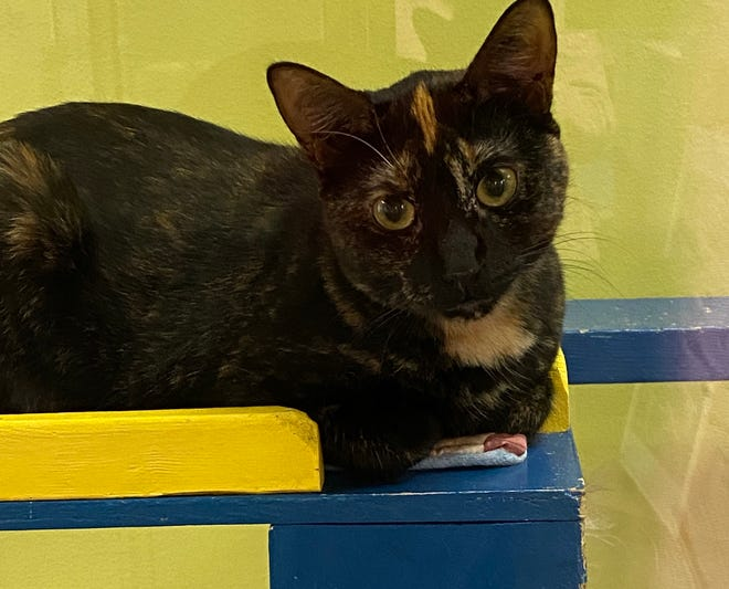 Empress Coraline is waiting at the Oshkosh Area Humane Society for a new family.