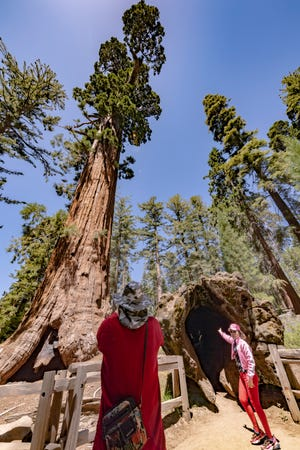 Tourists pose for pictures with the Robert E. Lee tree in the General Grant Grove of Kings Canyon National Park on Thursday, June 18, 2020. Climbing on or walking near the giant sequoias can damage the feeding roots which are very close to the surface of the ground.