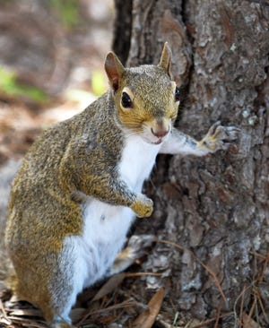 Want to attract squirrels to your yard? Plant a tree.