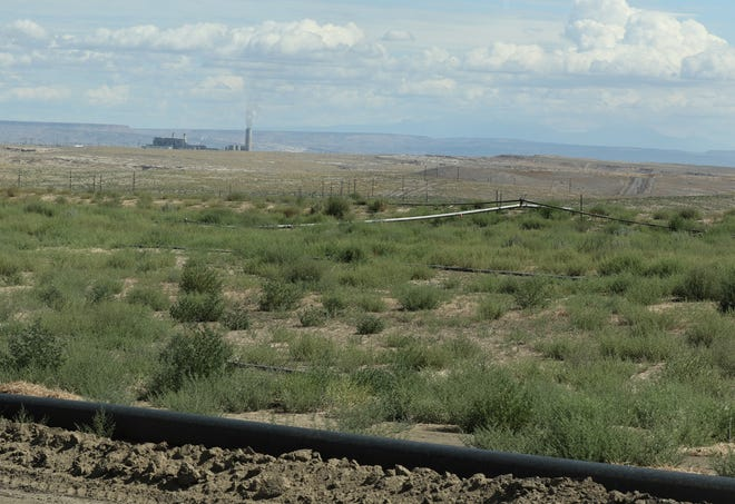 A recently seeded area at Navajo Mine is pictured Aug. 1, 2019. The Four Corners Power Plant is in the background.