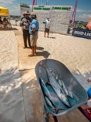 Los pescadores revisan su captura durante un rodeo de pesca Bud Light en Flounders en Pensacola Beach el sábado 20 de junio de 2020.